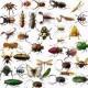 Insecten, insecticiden en ander ongedierte